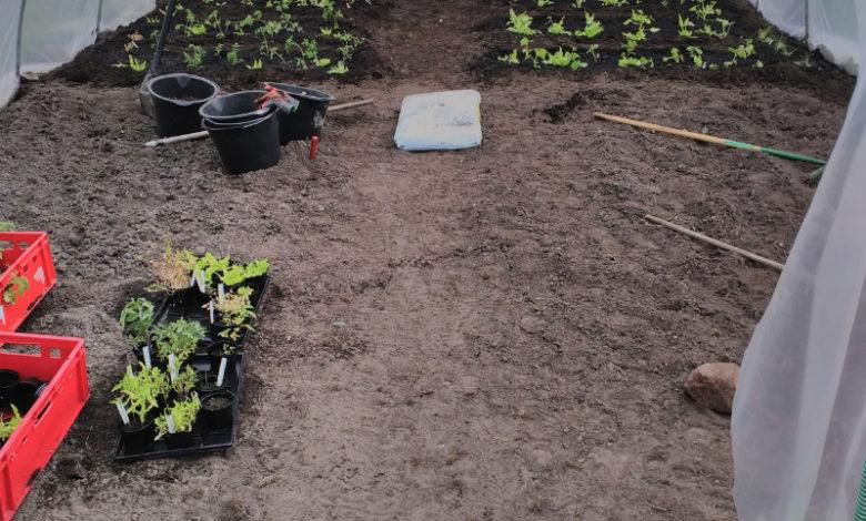 2019 - Anpflanzen im Gewächshaus