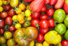 Photo of Tomatensorten