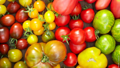 Photo of Tomatensorten