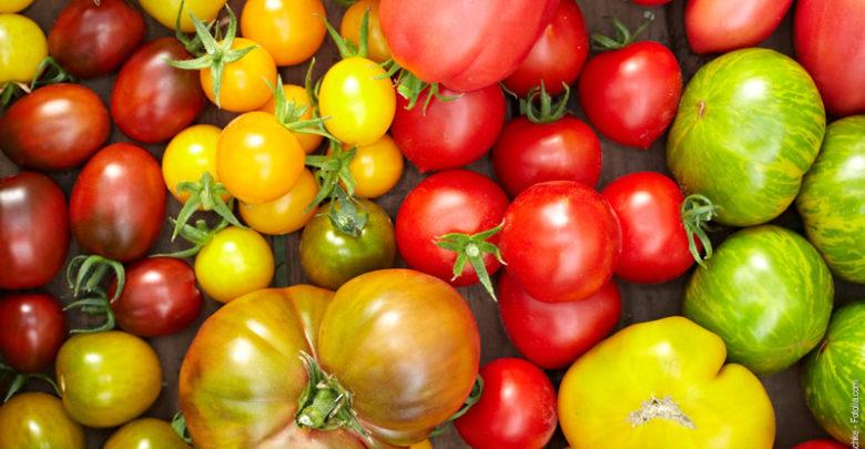 Tomaten Sorten bio
