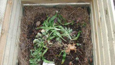 Photo of Dinge die in einen Kompost gehören und nicht gehören