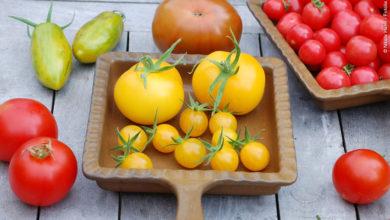 Photo of Tomaten: Wie sie richtig gelagert werden