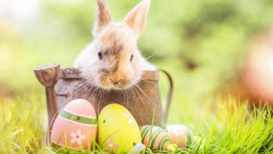 Photo of Wann ist Ostern und warum feiern wir Ostern?
